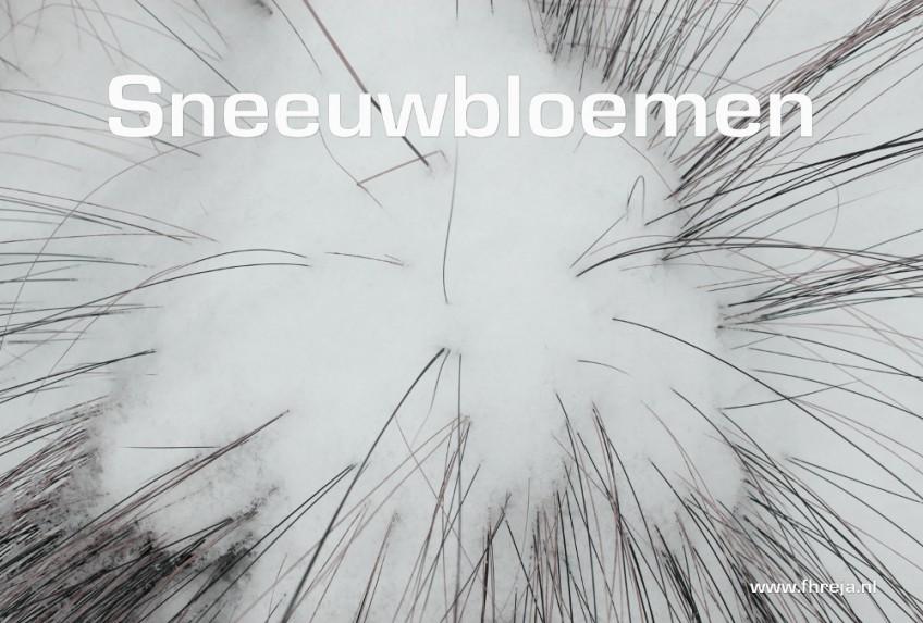 Blog - Week 1 - 2015 - Sneeuwbloemen - Fhreja - Ontwerpbureau Groene Leefomgeving