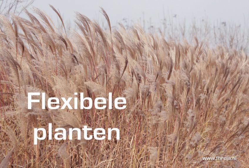 Blog - Week 2 - 2015 - Flexibele planten - Fhreja - Ontwerpbureau Groene Leefomgeving