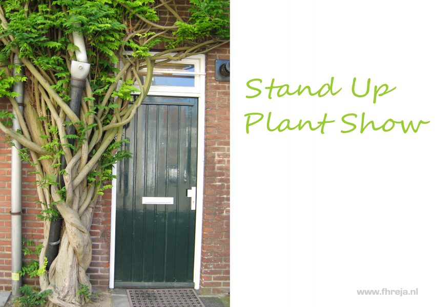 2017-01-Stand Up plant show