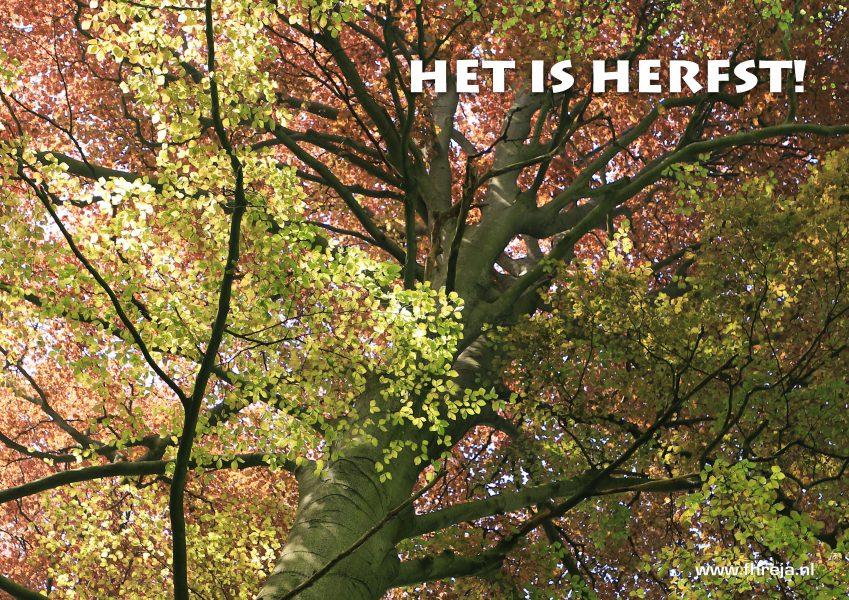 Het is herfst - Fhreja - Ontwerpbureau Groene Leefomgeving