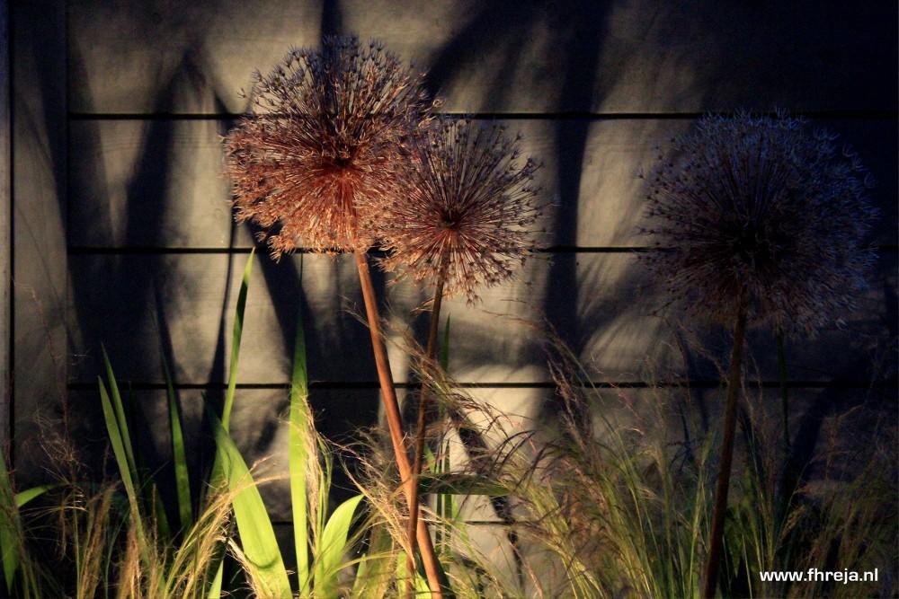 Tuinfotografie - Fhreja - Ontwerpbureau groene Leefomgeving