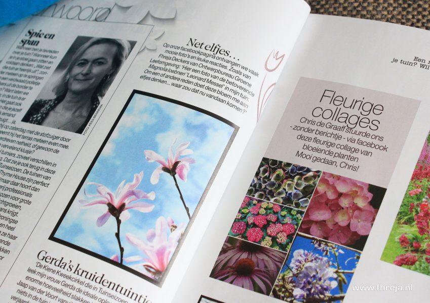 Magnolia foto in Tuinseizoen - bloesem - bloemen - foto