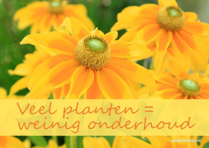 Veel planten is weinig onderhoud - Fhreja - Ontwerpbureau Groene Leefomgeving
