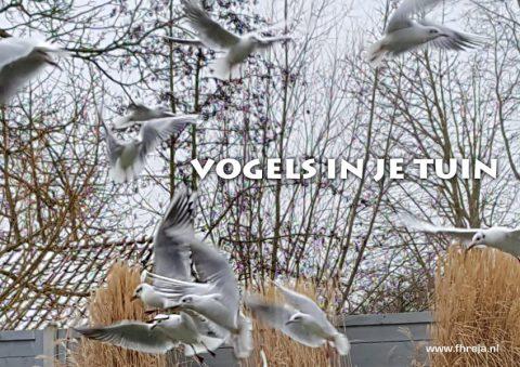 2019-03-Vogels in je tuin - Fhreja - Ontwerpbureau Groene Leefomgeving
