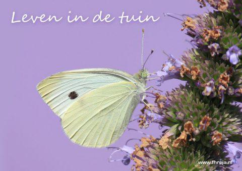 Leven in de tuin - Fhreja - Ontwerpbureau Groene Leefomgeving