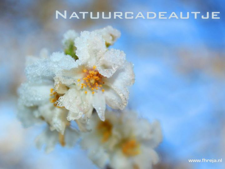 Cadeautje van de natuur