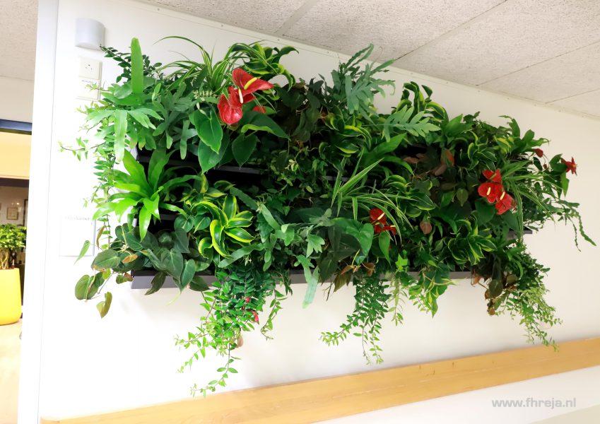 Ziekenhuis Tergooi - Blaricum plantenwand - Fhreja - Ontwerpbureau Groene Leefomgeving 04