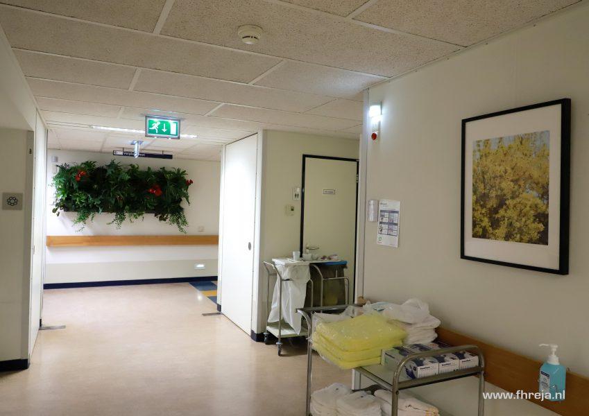 Ziekenhuis Tergooi - Blaricum - Fhreja - Ontwerpbureau Groene Leefomgeving 05
